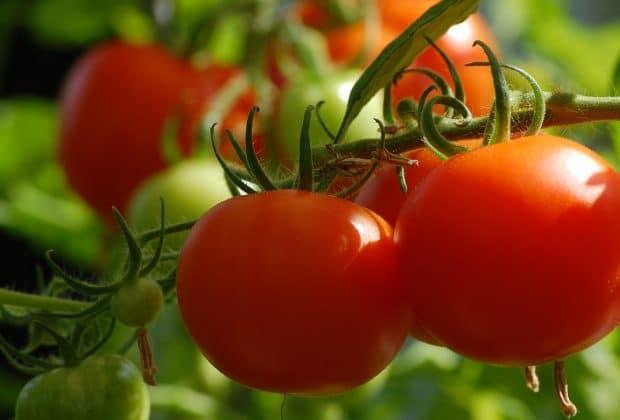 Pourquoi consulter un blog spécialisé dans le jardinage naturel ?